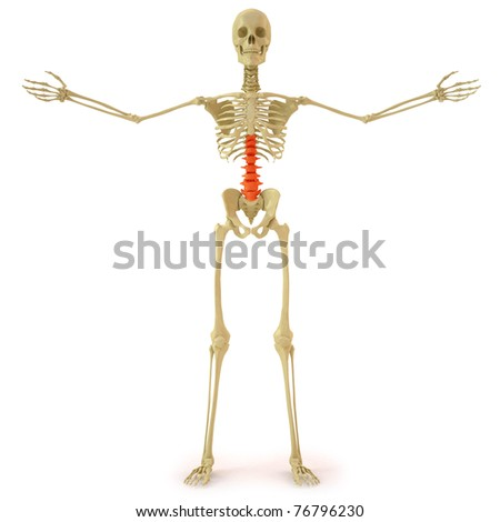 human skeleton with red spine. isolated on white. - stock photo