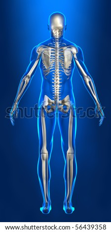 Human skeleton with x-ray body lines - stock photo