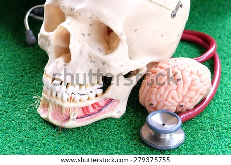human skull and brain model on green grass background - stock photo