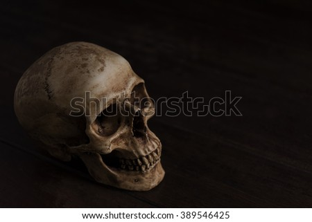human skull darkness concept, still life photography with human skull