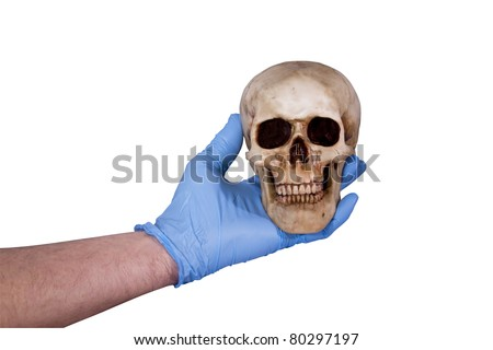 human skull held by a gloved hand isolated  over a white background with a clipping path at original size - stock photo