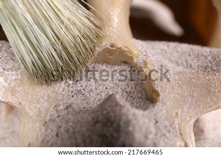 Human skull in sand and brush closeup - stock photo