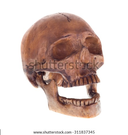 Human skull isolated on a white background - stock photo