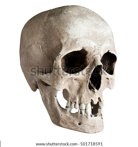 side view human skull stock photo 123786979 - shutterstock, Human Body