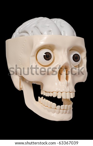 Human skull made of plastic