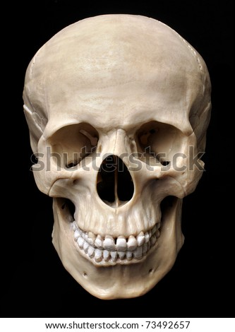 Human skull model - stock photo