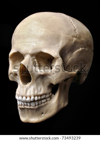 human skull anatomy stock images, royalty-free images & vectors, Skeleton