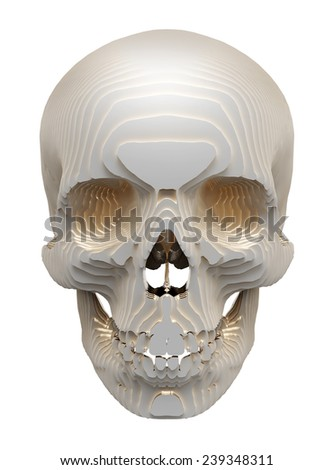 Human skull model is layered on a white background