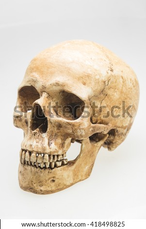 human skull model on isolated white background