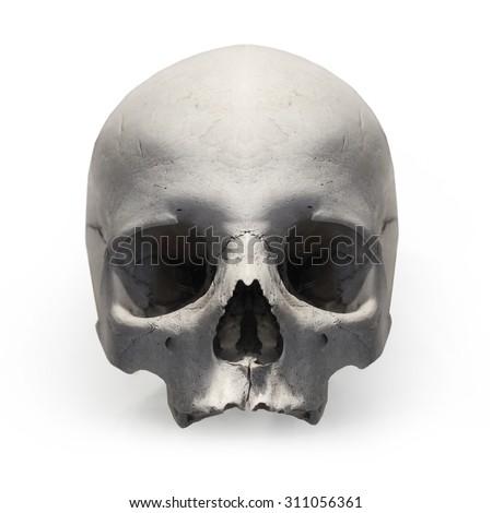 Human skull on white background. - stock photo