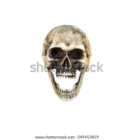 Human skull  open the mouth (front) . Isolated on white background with clipping path - stock photo
