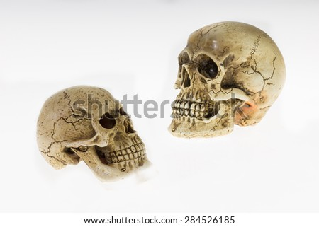 Human skull two heads turned to look each other, on a white background. - stock photo