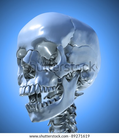 Human skull with a slightly open jaw