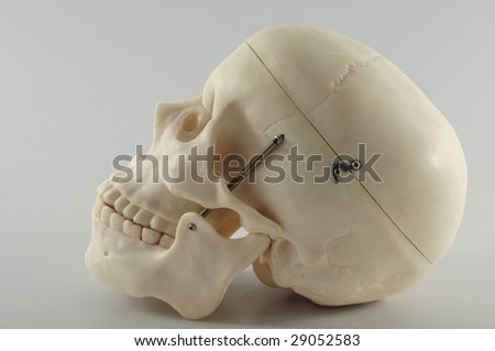 Human skull with clipping path. - stock photo