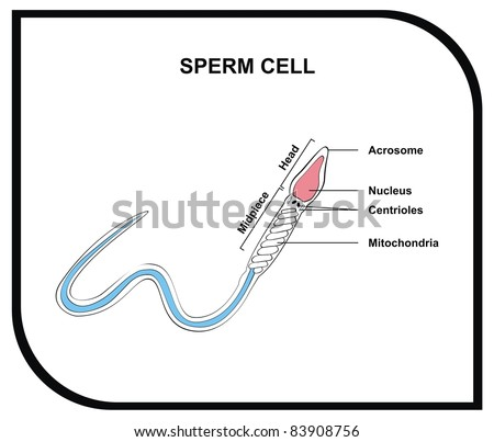 cell membrane stock images  royalty