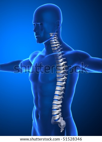 Human spine concept isolated - stock photo
