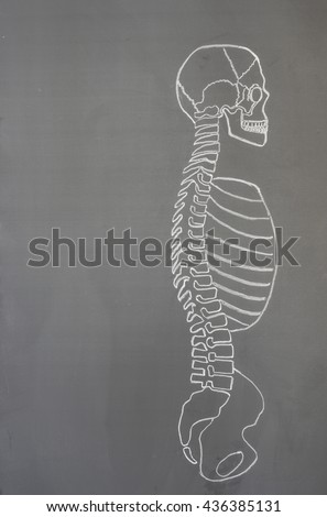 Human spine drawing with chalk on the blackboard
