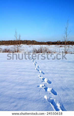 human traces on snow - stock photo