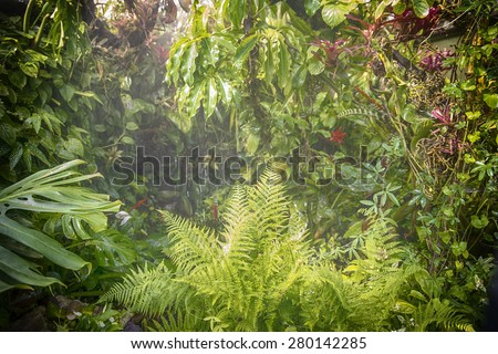 humid tropical rain forest with typical various plant species - stock photo