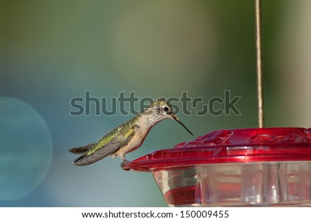 Hummingbird about to drink nectar from a red bird feeder with blurred background - stock photo