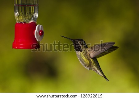 Hummingbird and feeder. Side view of hummingbird hovering next to a bird feeder. - stock photo