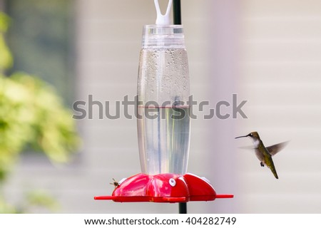 Hummingbird & bee together at the feeder - stock photo