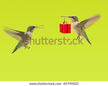 Hummingbird carrying a gift to another hummingbird, a background with copy space - stock photo