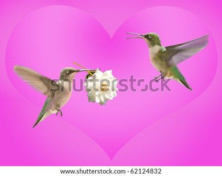 Hummingbird carrying a rose for another, with a pink heart background, Valentine design - stock photo