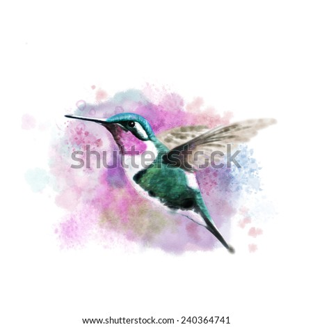 Hummingbird, digital watercolor - stock photo