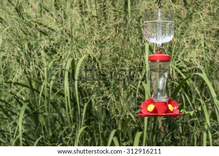 Hummingbird Feeder with an Ant Moat - stock photo