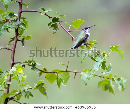 Hummingbird perched in tree
