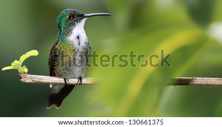 Hummingbird with copy space - stock photo