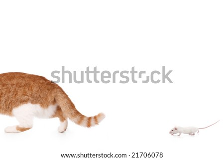 humor concept with cat and mouse - stock photo