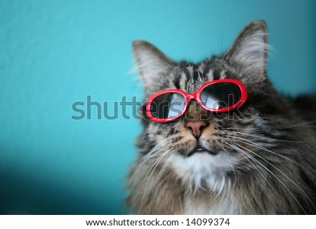 Humorous image of a cat with sunglasses...shallow depth of field - stock photo