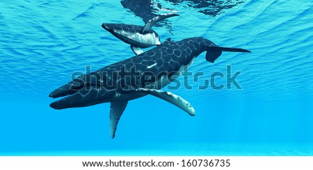 Humpback Mother and Calf - A Humpback whale mother swims with her calf on their migration route through ocean waters. - stock photo