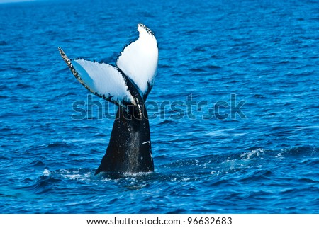 Humpback Tail-fin - stock photo