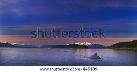 Humpback Whale, Inside Passage, Alaska - stock photo