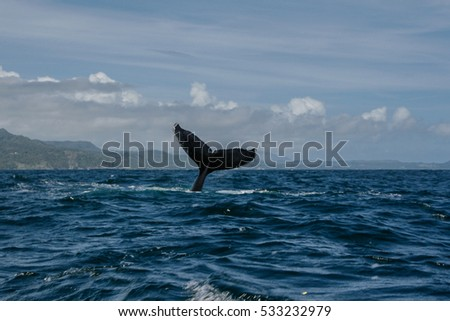 Humpback whale tail in Samana, Dominican republic