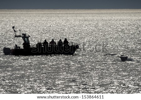 Humpback whale tail while going down  - stock photo