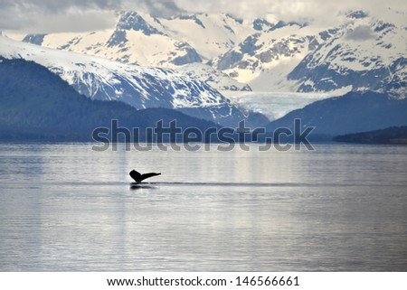 Humpback whale tail with icy mountains backdrop Alaska - stock photo