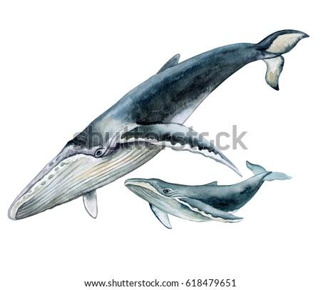 whale illustration stock images royaltyfree images