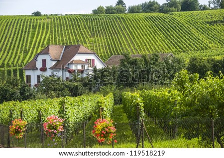 Hunawihr (Bas-Rhin, Alsace, France) - White  house and vineyard at summer - stock photo
