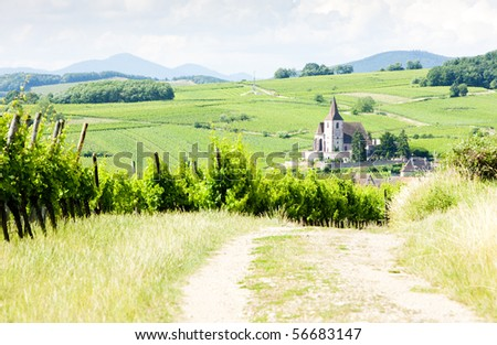 Hunawihr with vineyards, Alsace, France