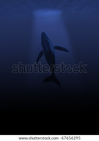 hunchback whale in the deep sea