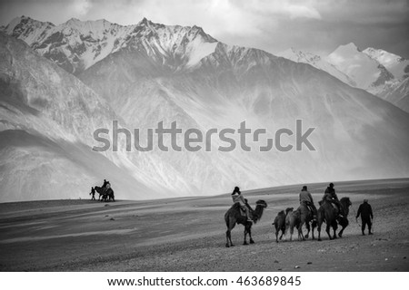 HUNDER NUBRA VALLEY LADAKH INDIA 12 April 2014 : tourist riding Camel walking to sand dune at Nubra valley Ladakh india