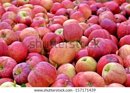 hundreds of apples ready for chupping - stock photo