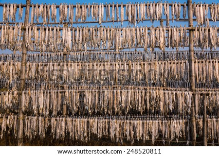 Hundreds of fish suspended from bamboo poles being dried at a fishing industry in Digha, West Bengal, India - stock photo