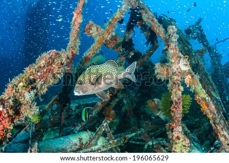 Hundreds of tropical fish around an underwater wreck - stock photo