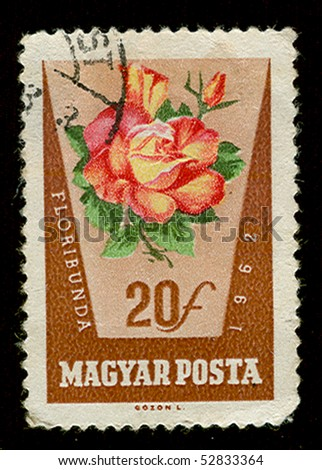 "Hungary - CIRCA 1962. A stamp printed in Czechoslovakia showing flower ""Floribunda"", circa 1962."