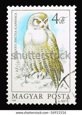 HUNGARY - CIRCA 1984: A stamp printed in Hungary showing Snowy Owl, circa 1984